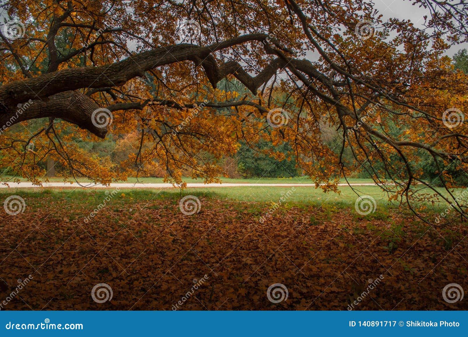 Πτώση στο πάρκο φθινοπώρου Μεγάλος κλάδος με το κίτρινο φύλλωμα