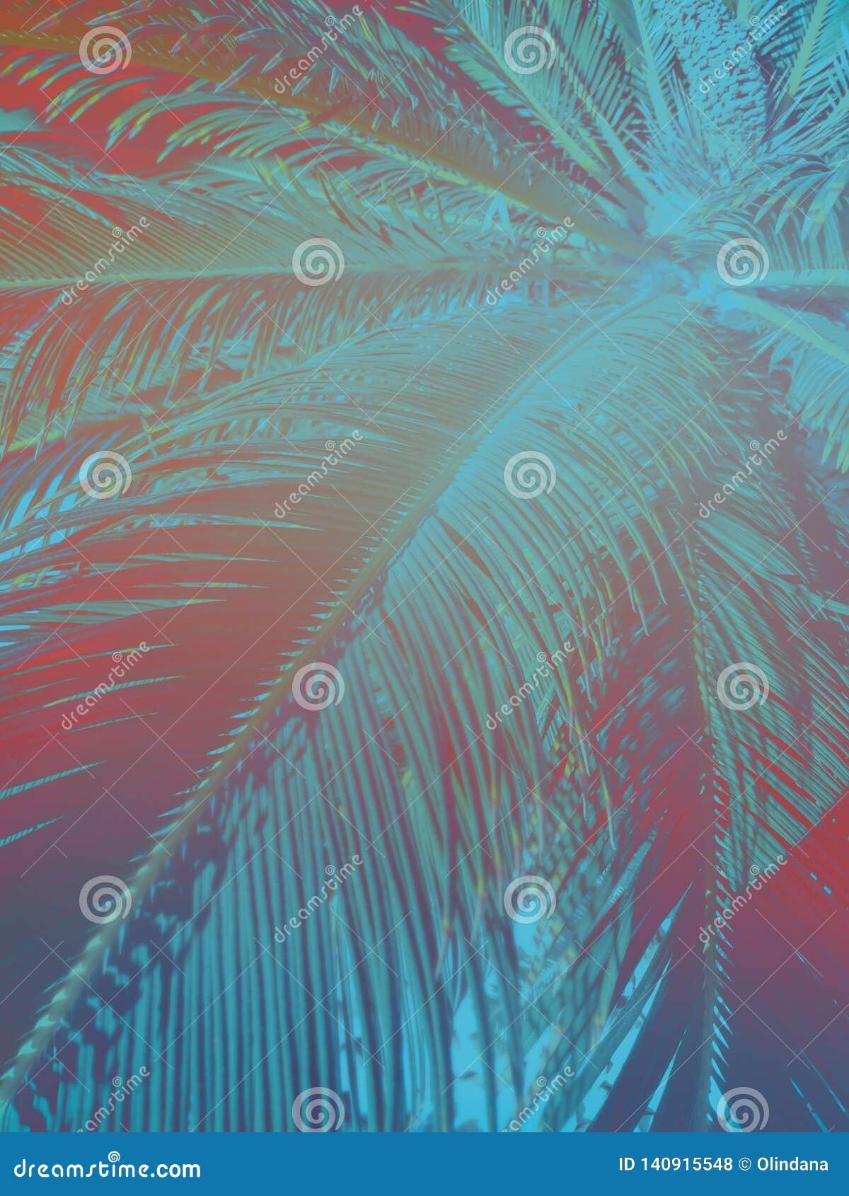 Абстрактная тропическая предпосылка природы Длинная пальма выходит в винтажный стиль с тонами бирюзы teal градиента розовыми в ст