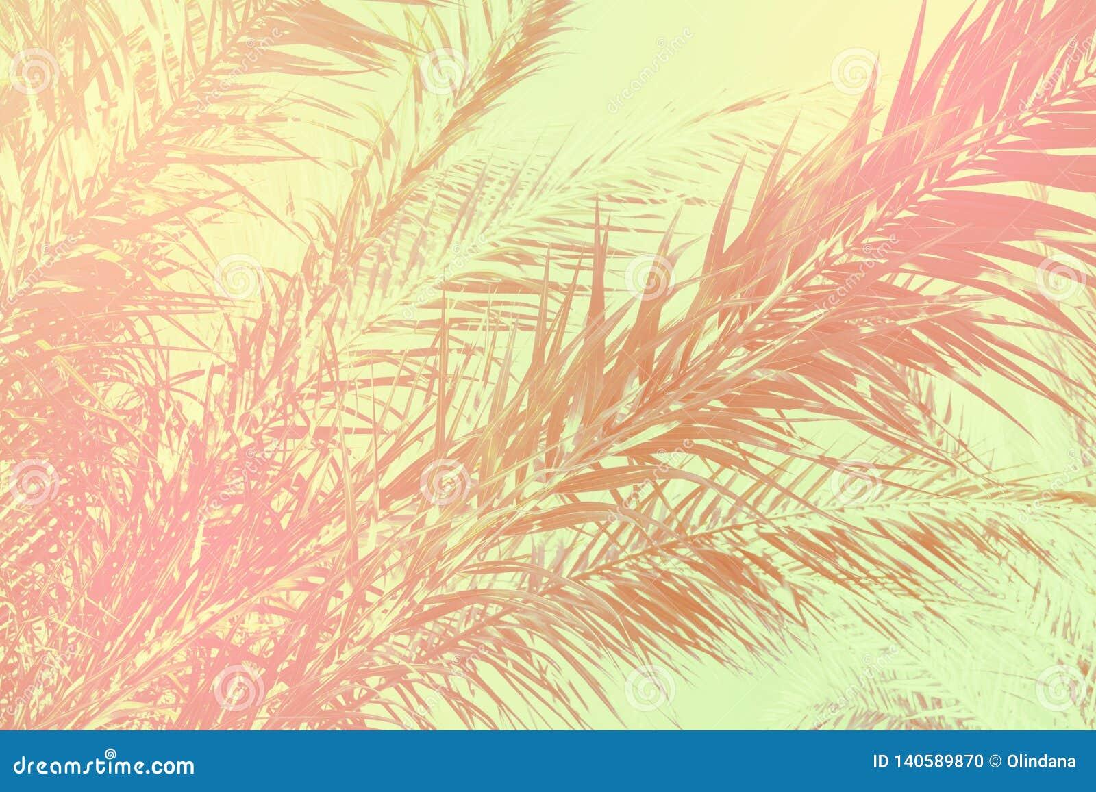 Абстрактная тропическая предпосылка природы Длинная пальма выходит небо Винтажный розовый серый зеленый цвет тонизировал увяданну