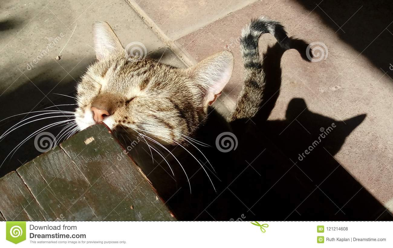 А sterilised street tabby lady-cat rubs it's face on a bench with it's eyes closed and cat's shadow