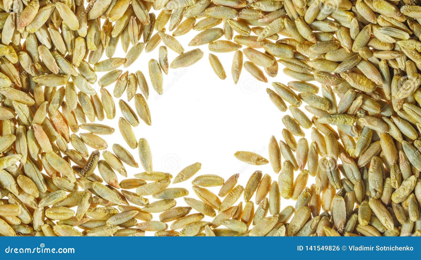 Белый фон с зерном пшеницы