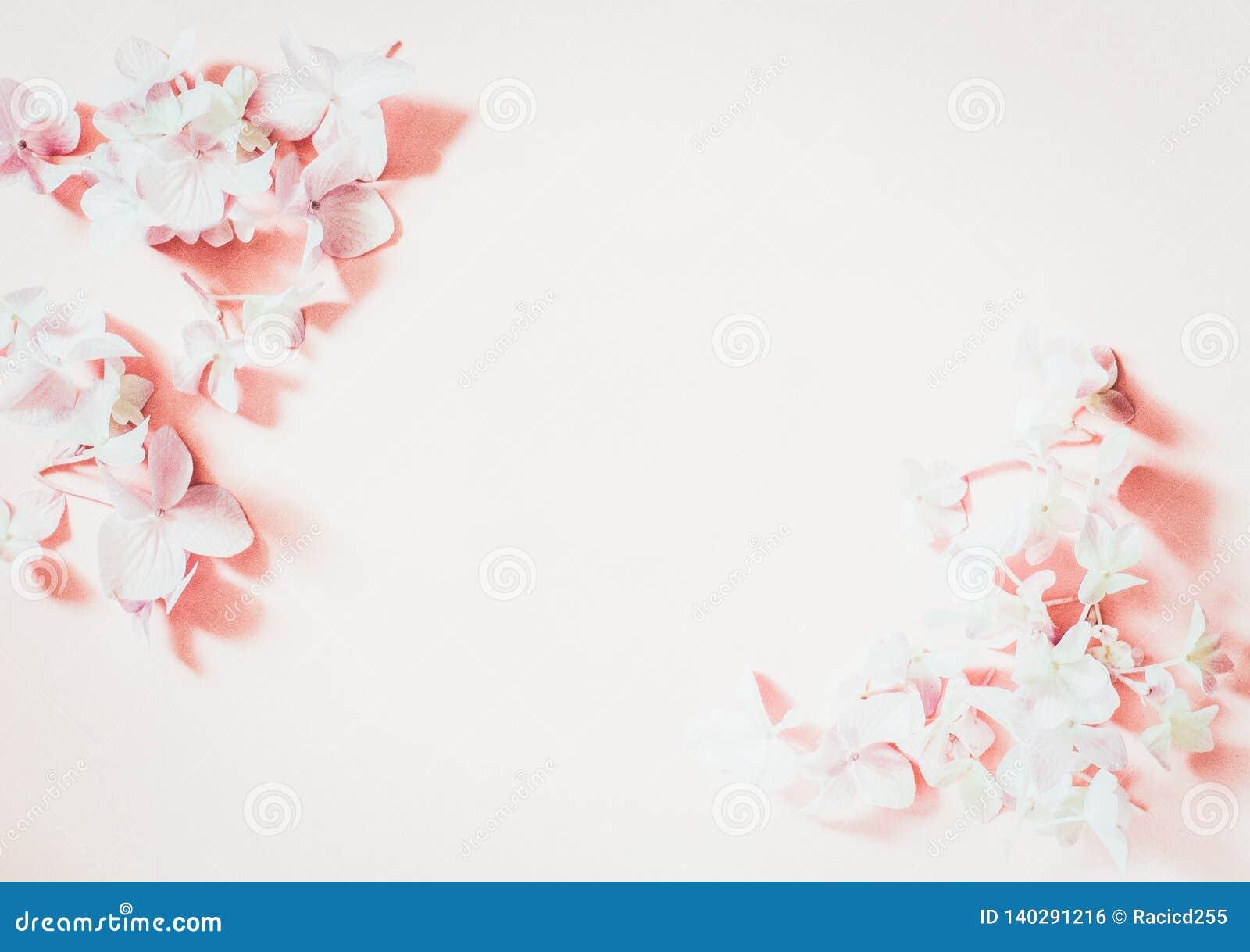 Введенная в моду женственная квартира кладет на бледную пастельную розовую предпосылку, взгляд сверху Рабочий стол минимальной же