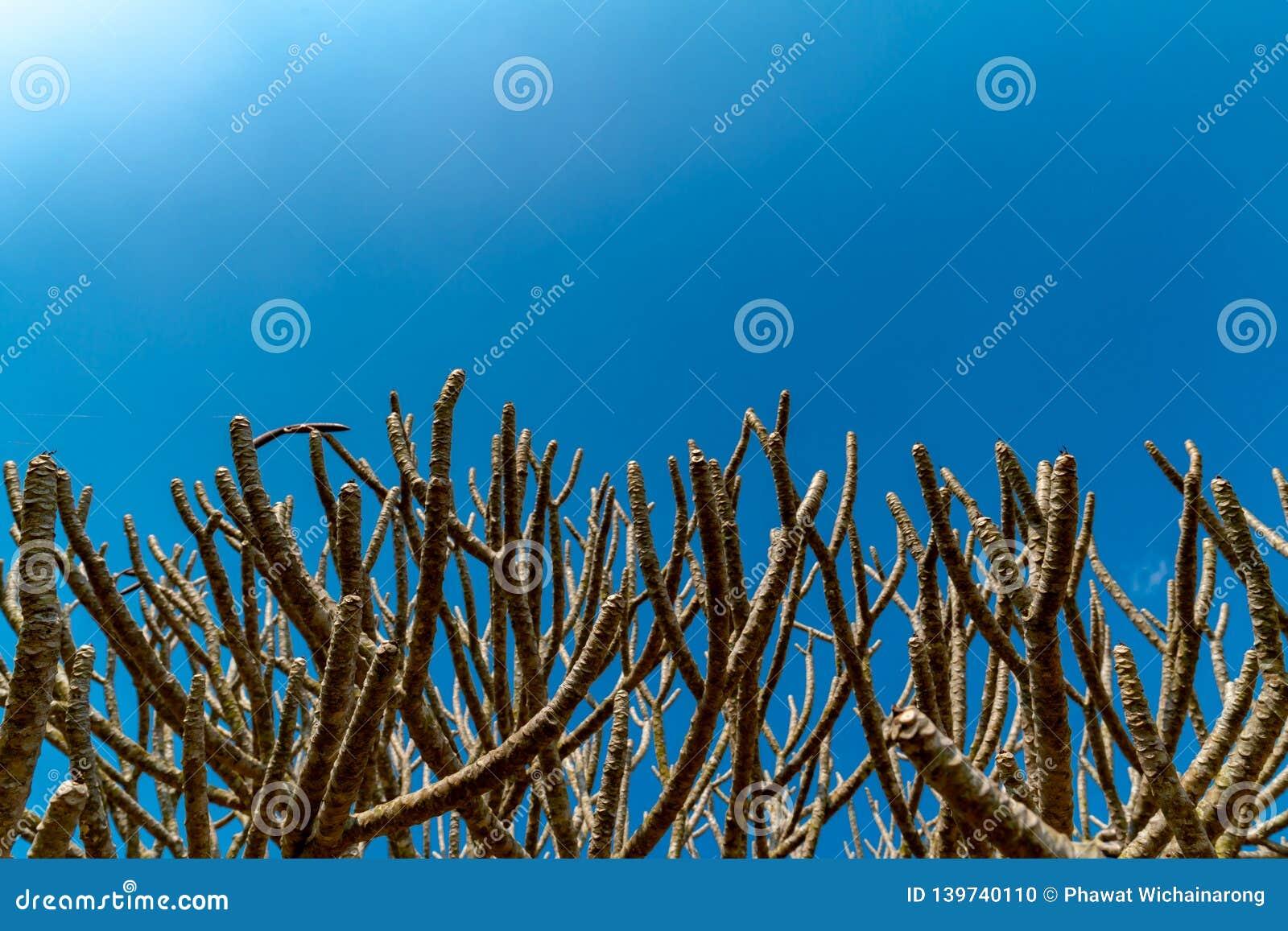 Ветви деревьев виска на ясной предпосылке голубого неба