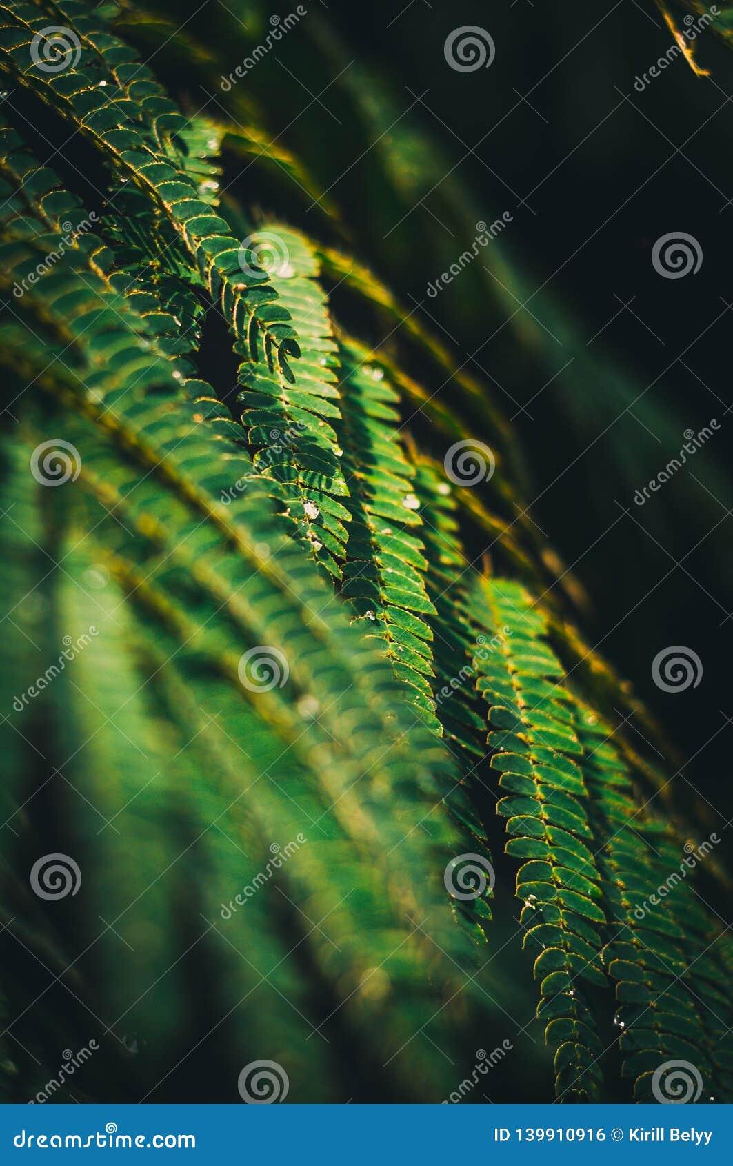 Ветвь папоротника с дождевыми каплями