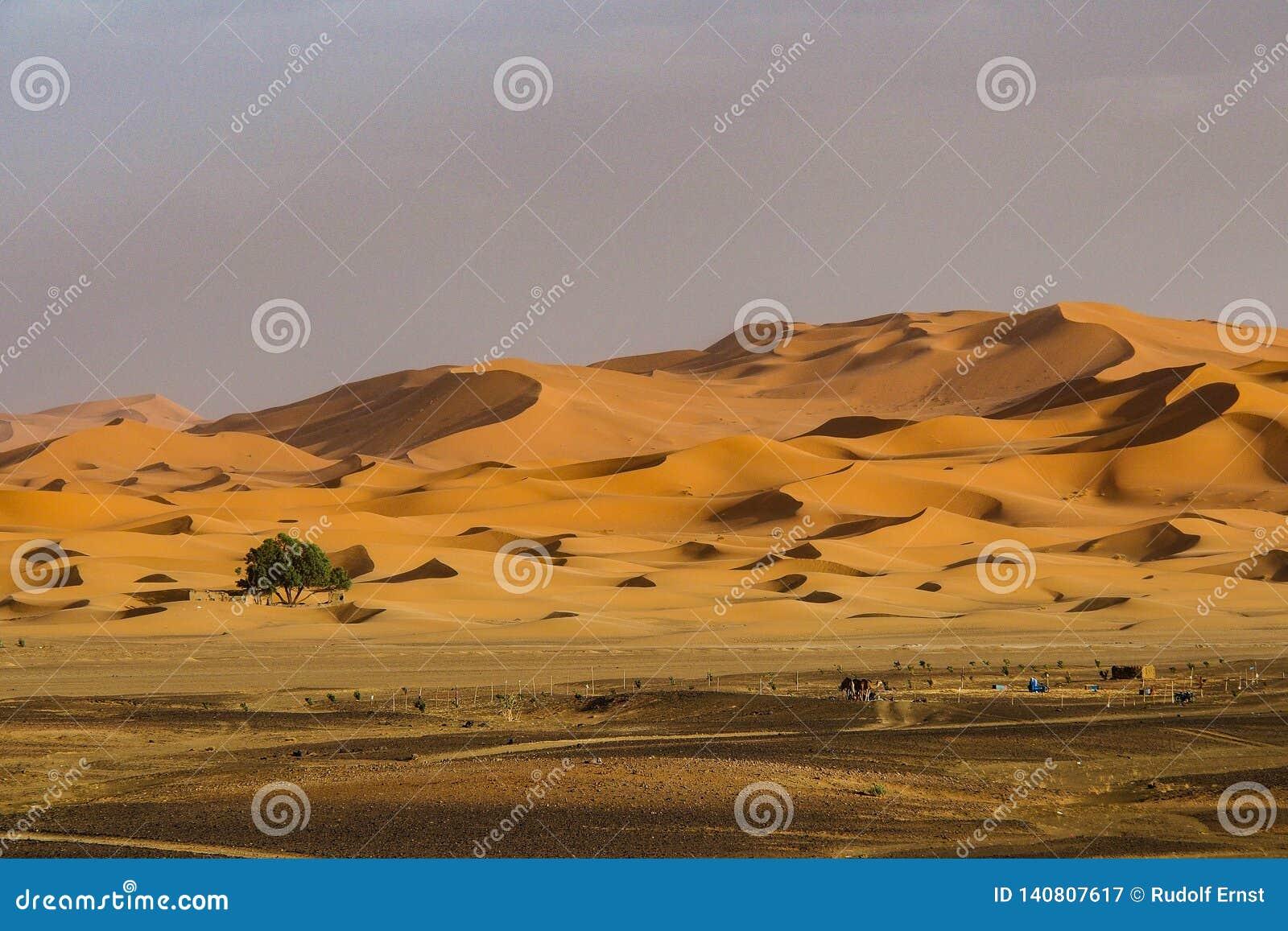 В дюнах эрга Chebbi около Merzouga в юго-восточном Марокко