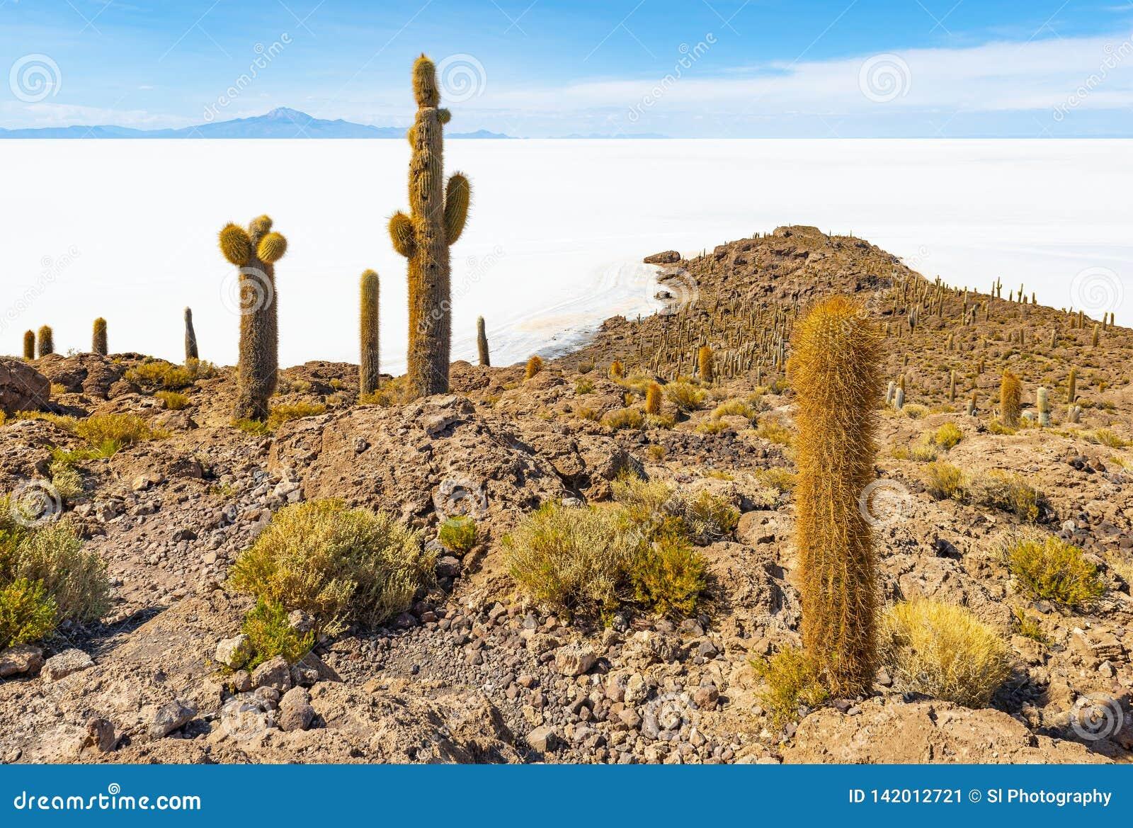 Гигантский кактус в квартире соли Uyuni, Боливия Atacama
