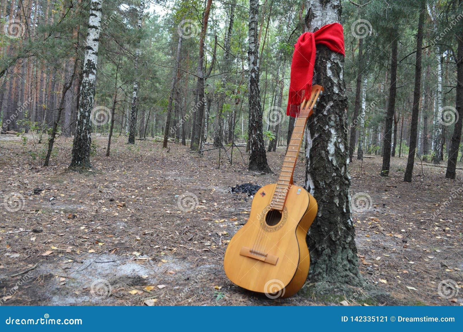 Гитара в середине леса с красным шарфом связанным вокруг