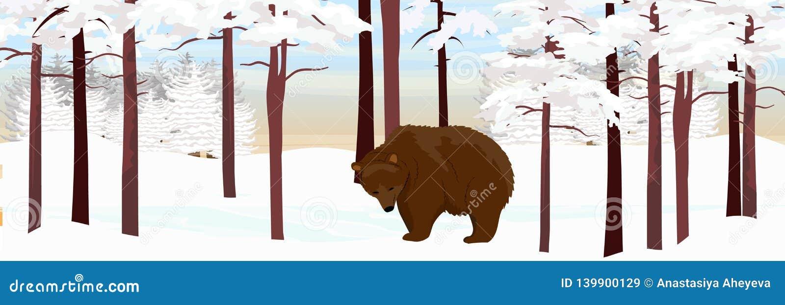 Гризли бурого медведя идет через снежный сосновый лес