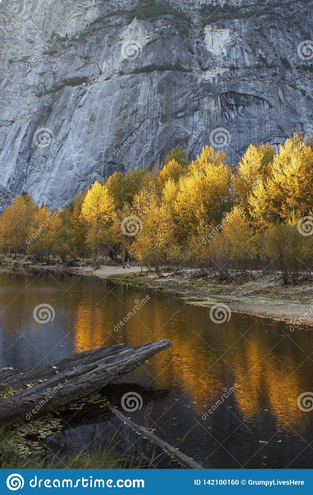 Живые sunlit золотые деревья отразили в воде на половинном куполе, Yosemite