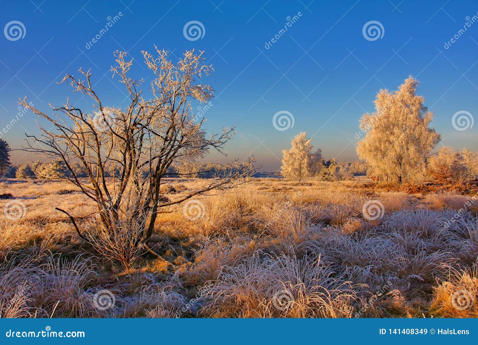 Замороженный ландшафт
