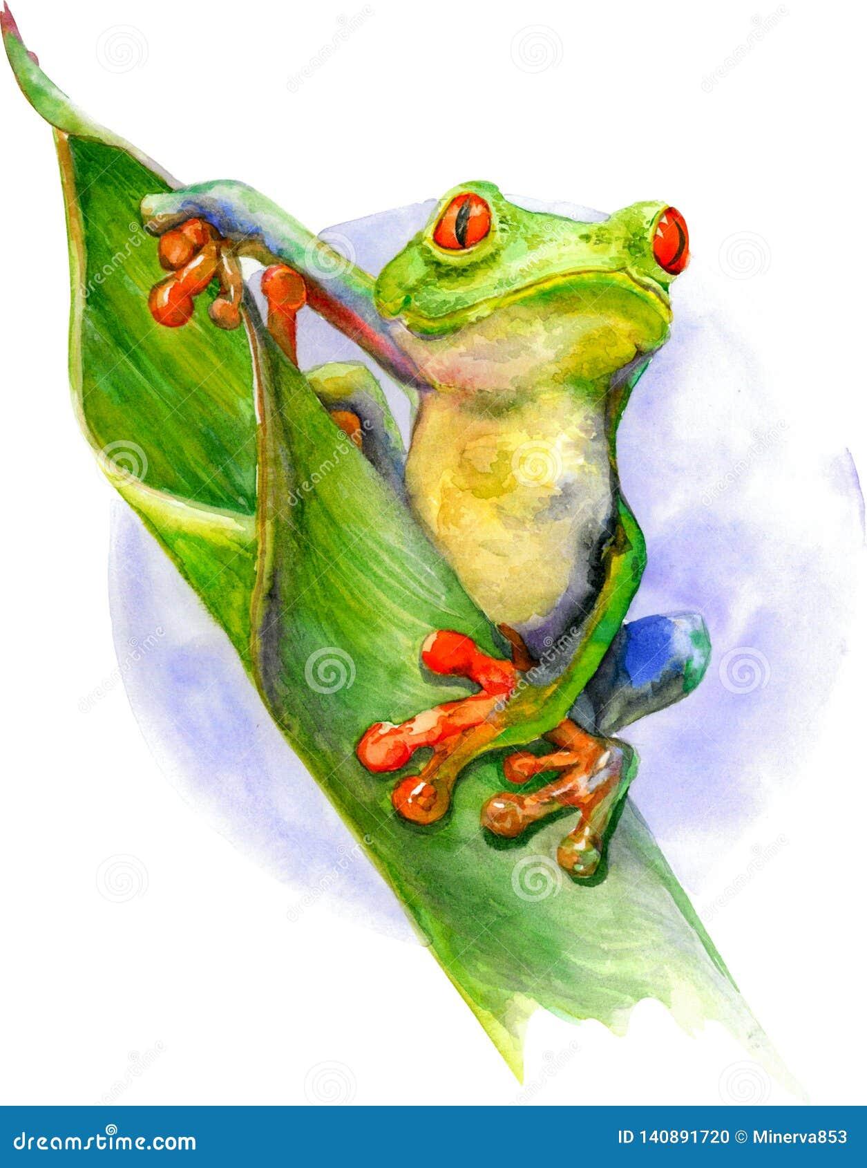 Зеленая лягушка с красными глазами и пальцами сидя на зеленых лист Иллюстрация акварели изолированная на белой предпосылке