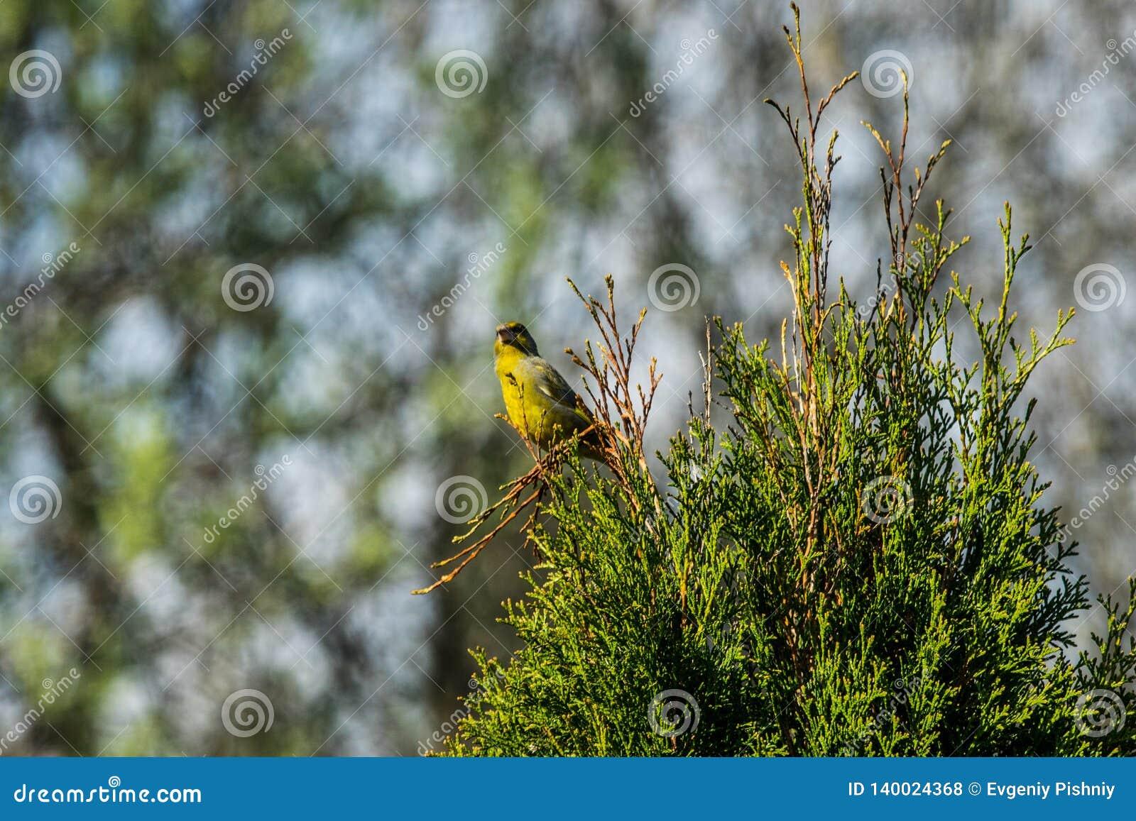Зеленая птица на ветви биографической