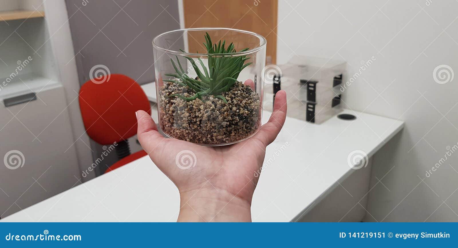 Зеленый искусственный суккулентный завод в прозрачной пластмассе может на человеческой руке