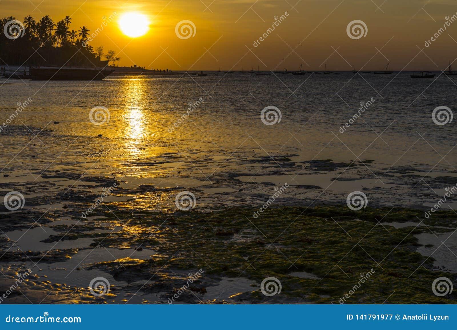 Золотой заход солнца над побережьем океана во время отлива