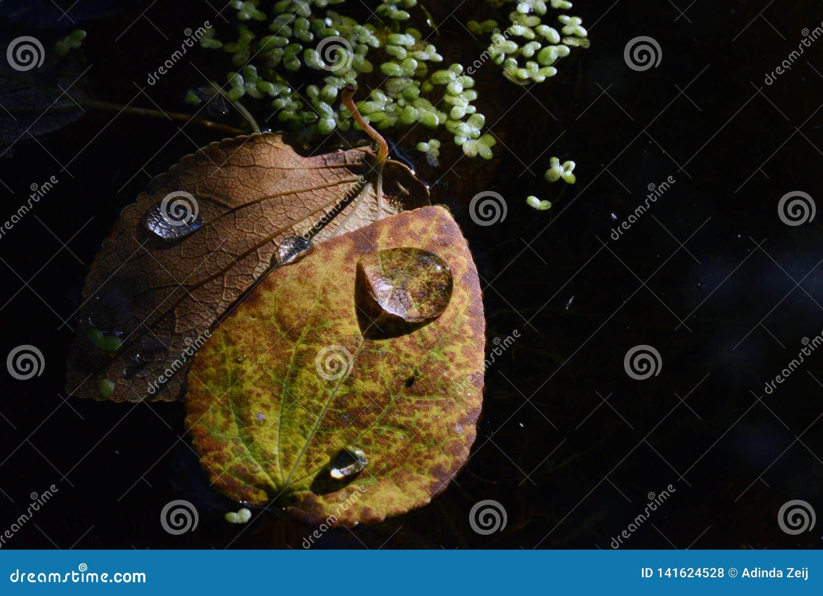 Изображение макроса лист осени в Valbyparken, Копенгагене