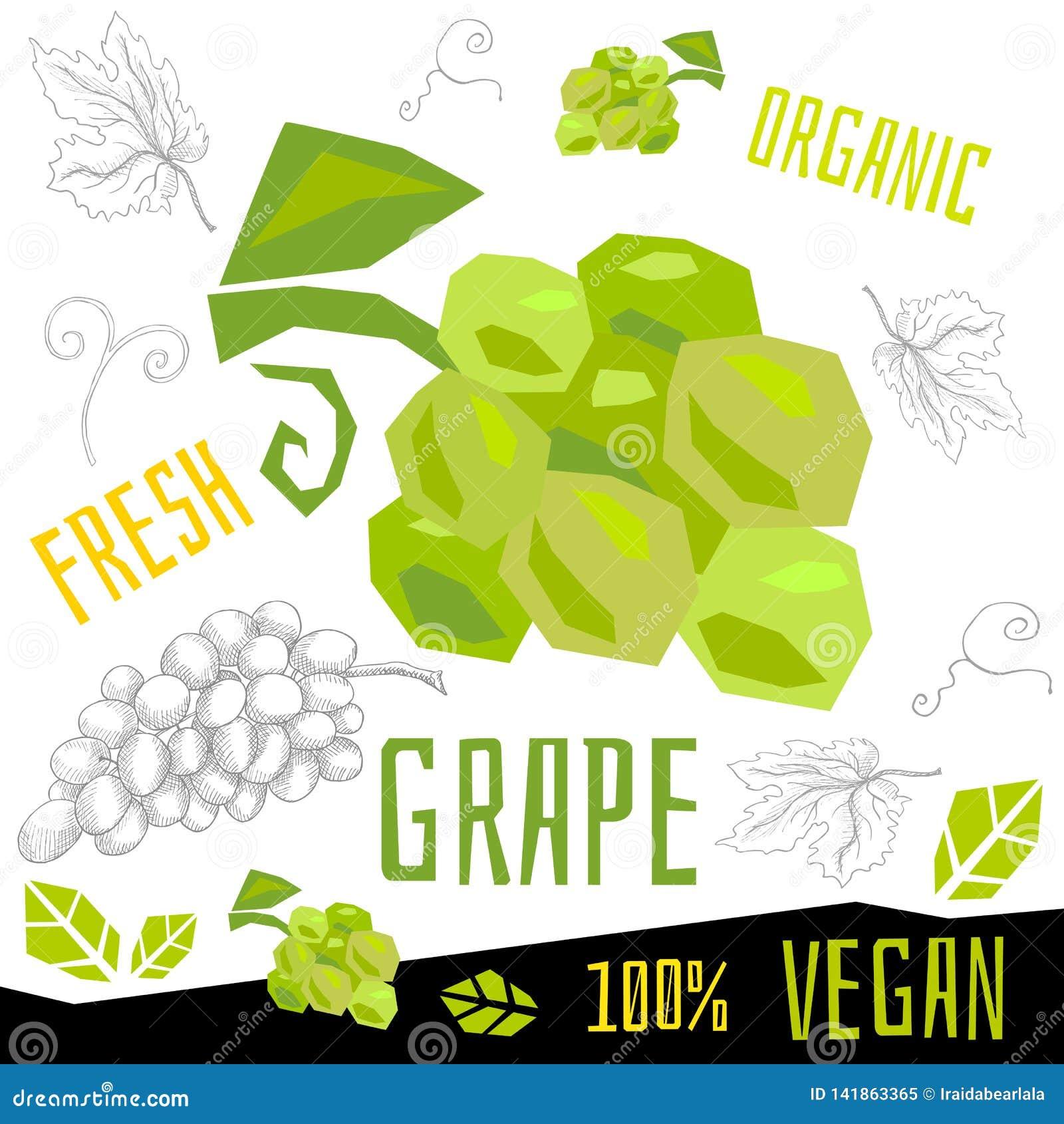 Иллюстрации свежей зрелой руки вектора еды vegan плодов виноградин виноградины органической вычерченные