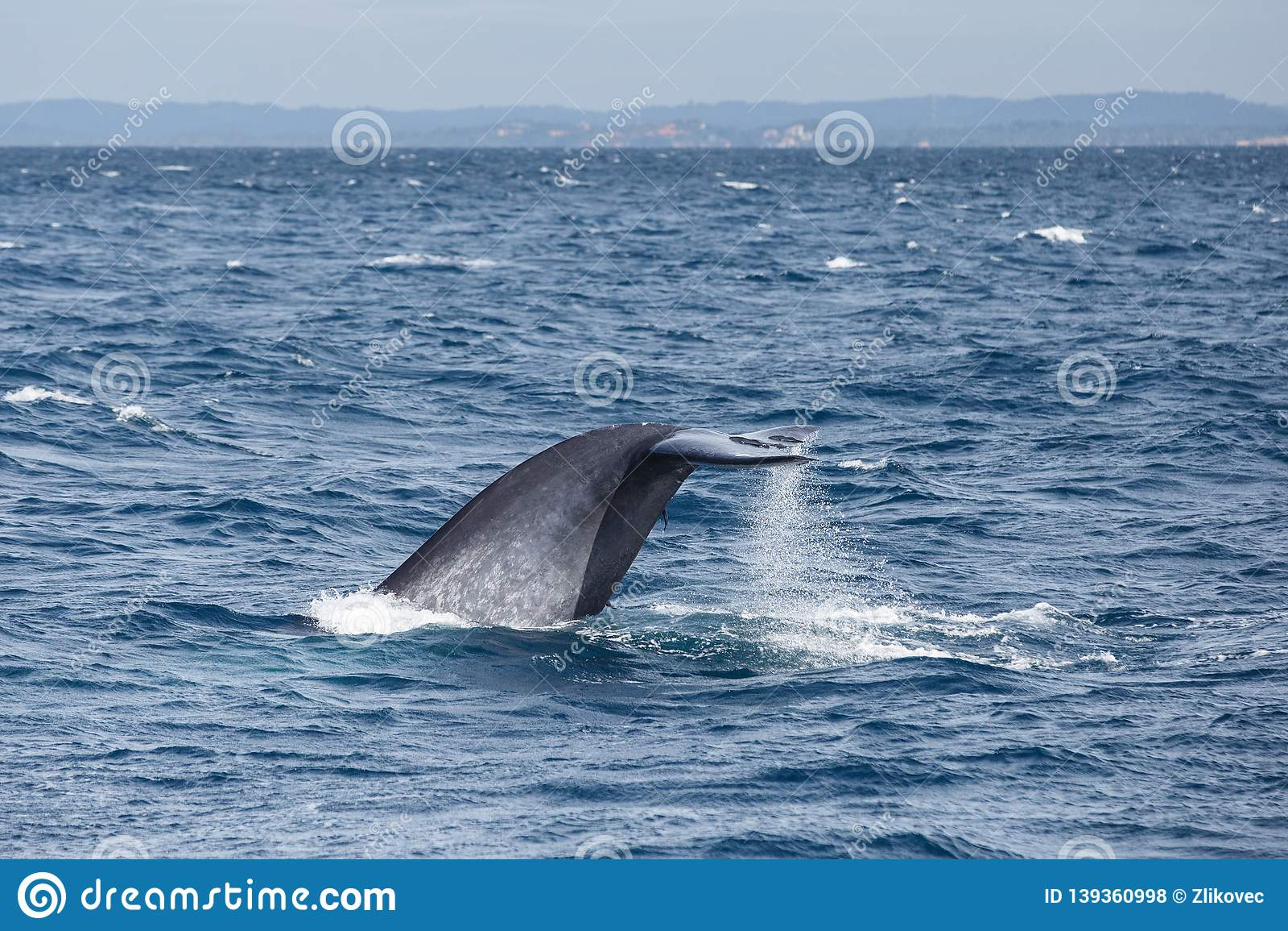 Кабель большого синего кита