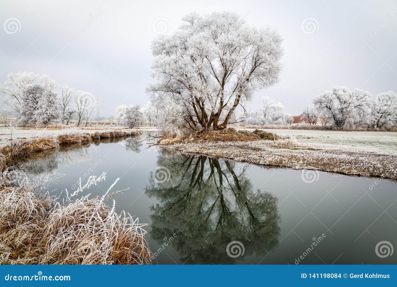 Кусты и coverd деревьев с изморозью