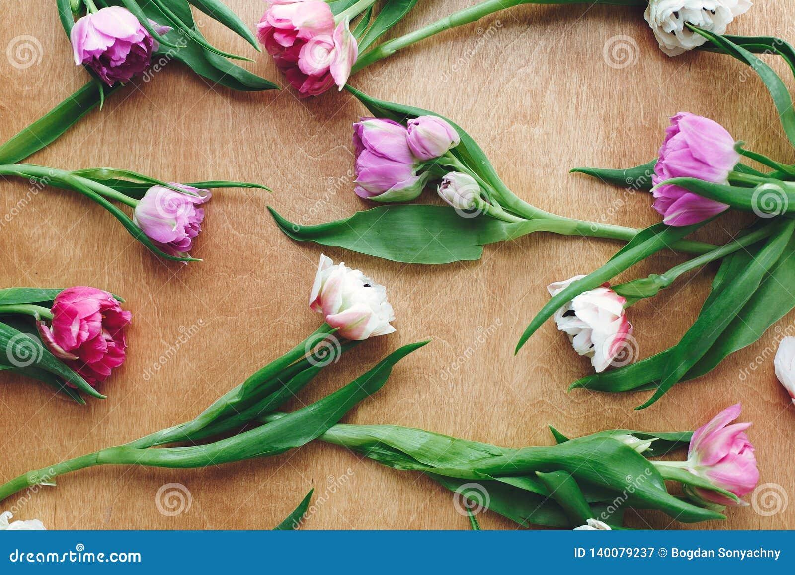 Красивые двойные тюльпаны пиона плоско кладут на деревянный стол Красочный пинк и пурпурные тюльпаны, стильный цветочный узор мат