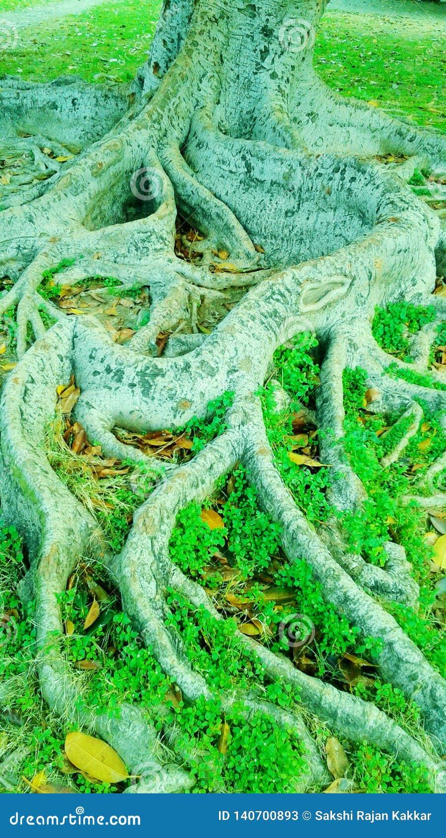 Красивые ствол дерева и кусты с естественными фоновым изображением светового эффекта солнца и дизайном обоев