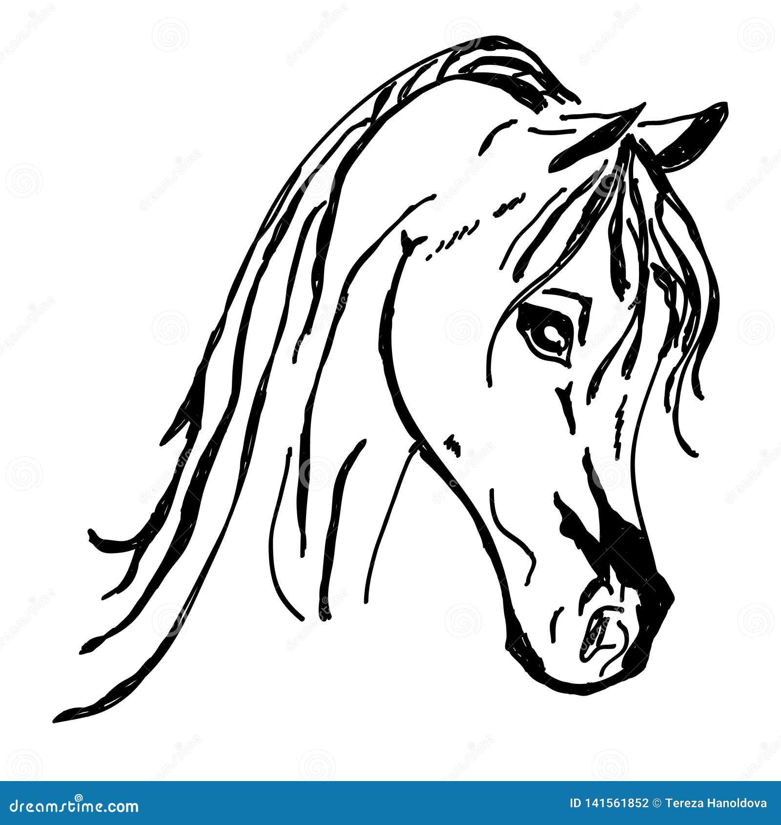 Красивый силуэт головы лошади изолированный на белой предпосылке