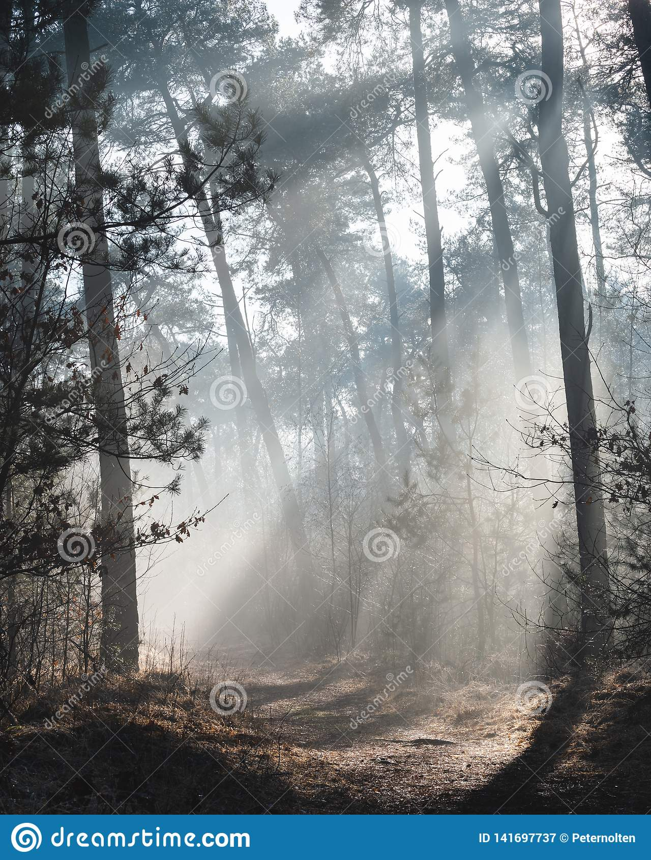 Красивый sunlit след леса на туманном утре с лучами солнца освещая вверх по полу леса