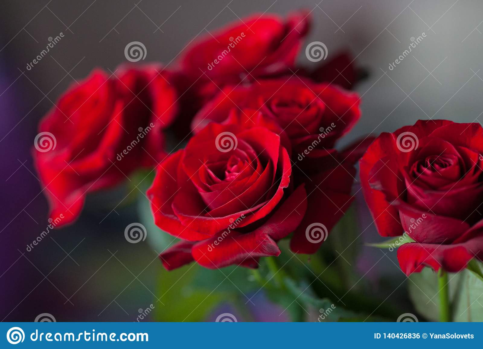 Красные розы на запачканной предпосылке