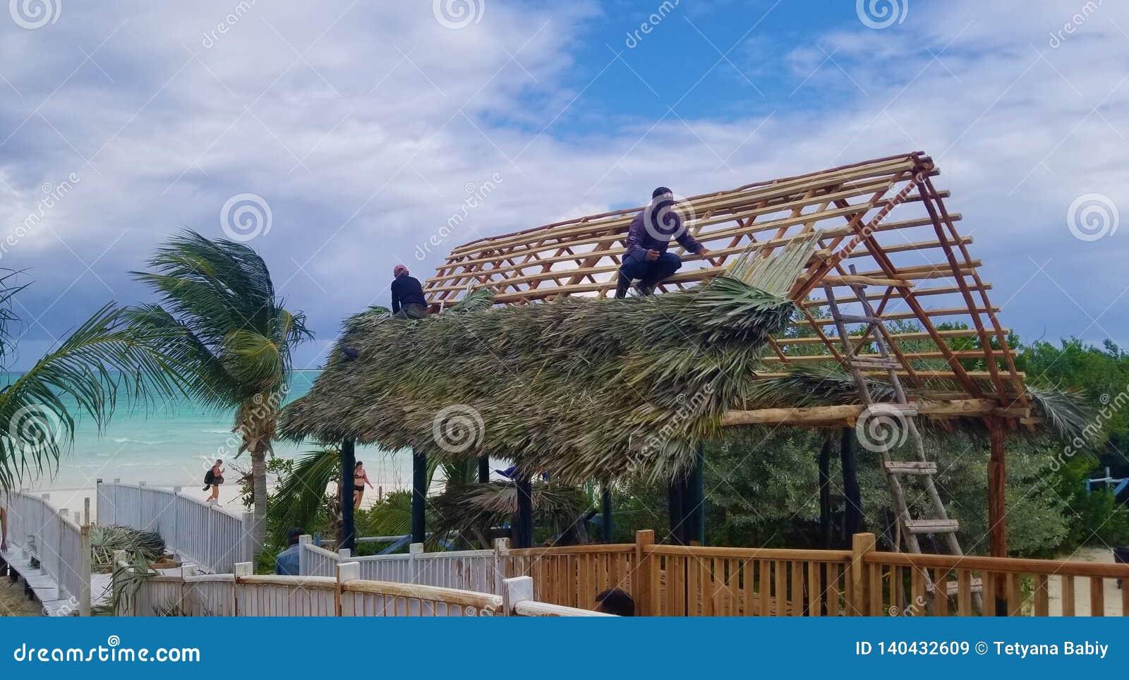 Кокосы Cayo, Куба - сногсшибательные виды на океан - шляпа здания
