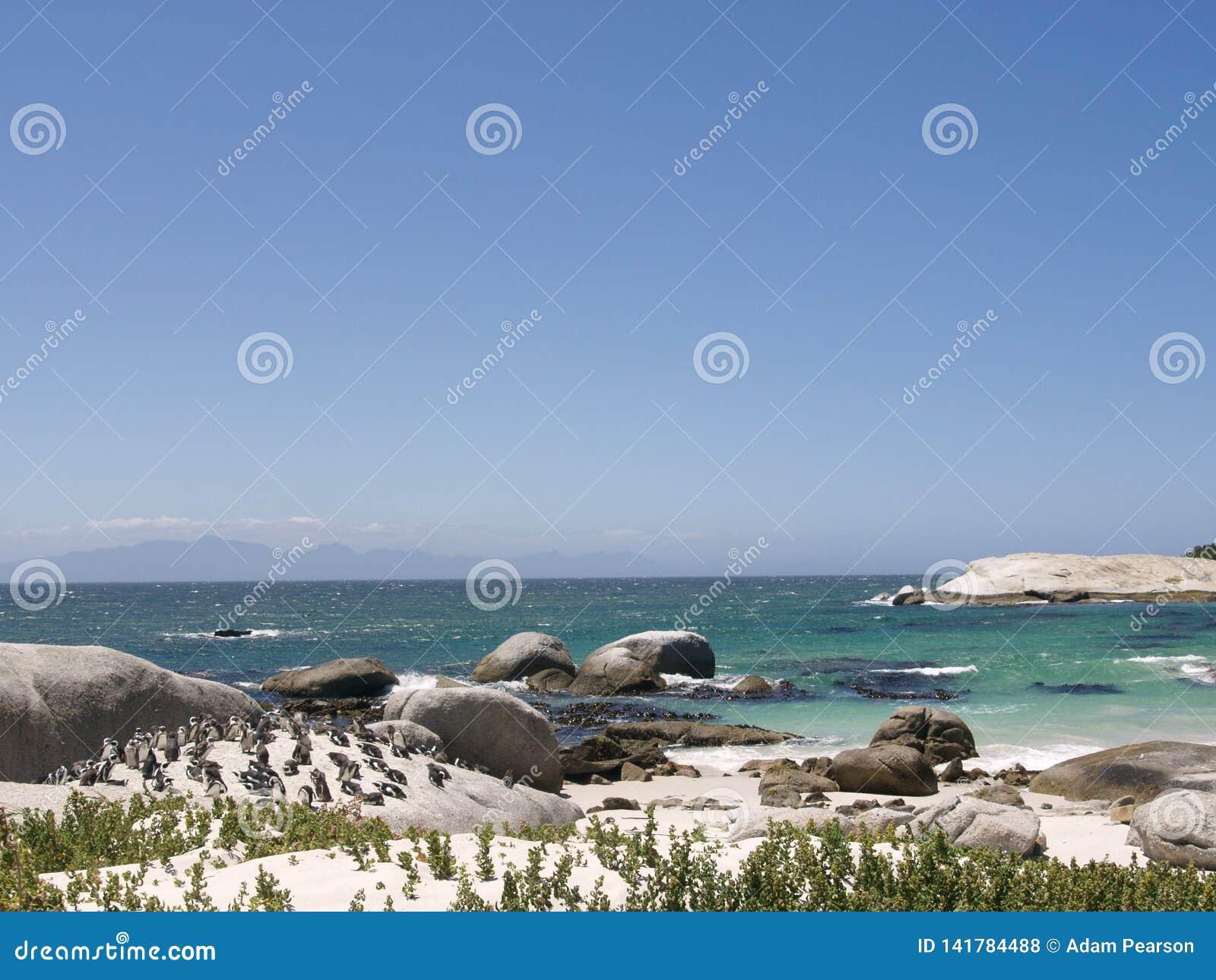 Колония пингвинов на валунах приставает к берегу, Кейптаун, Южная Африка