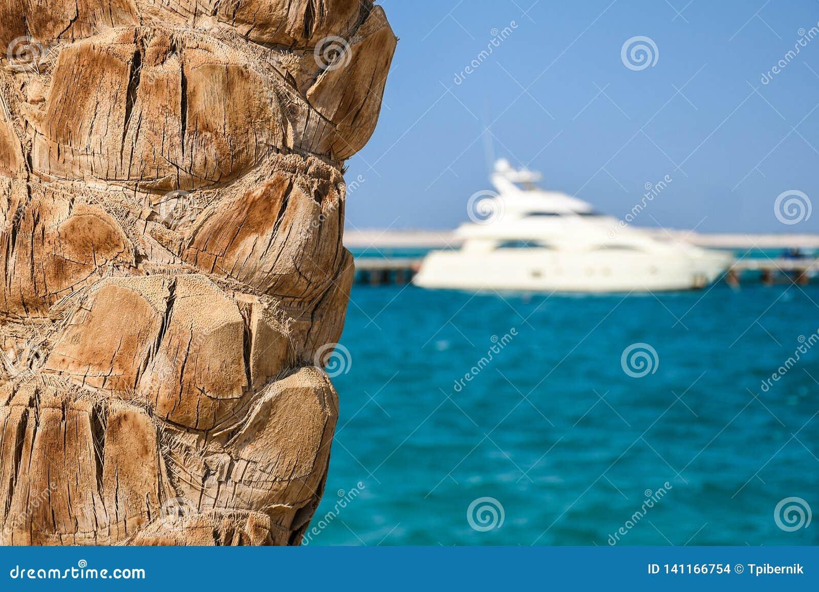 Конец хобота пальмы вверх на пляже с большой белой дорогой яхтой