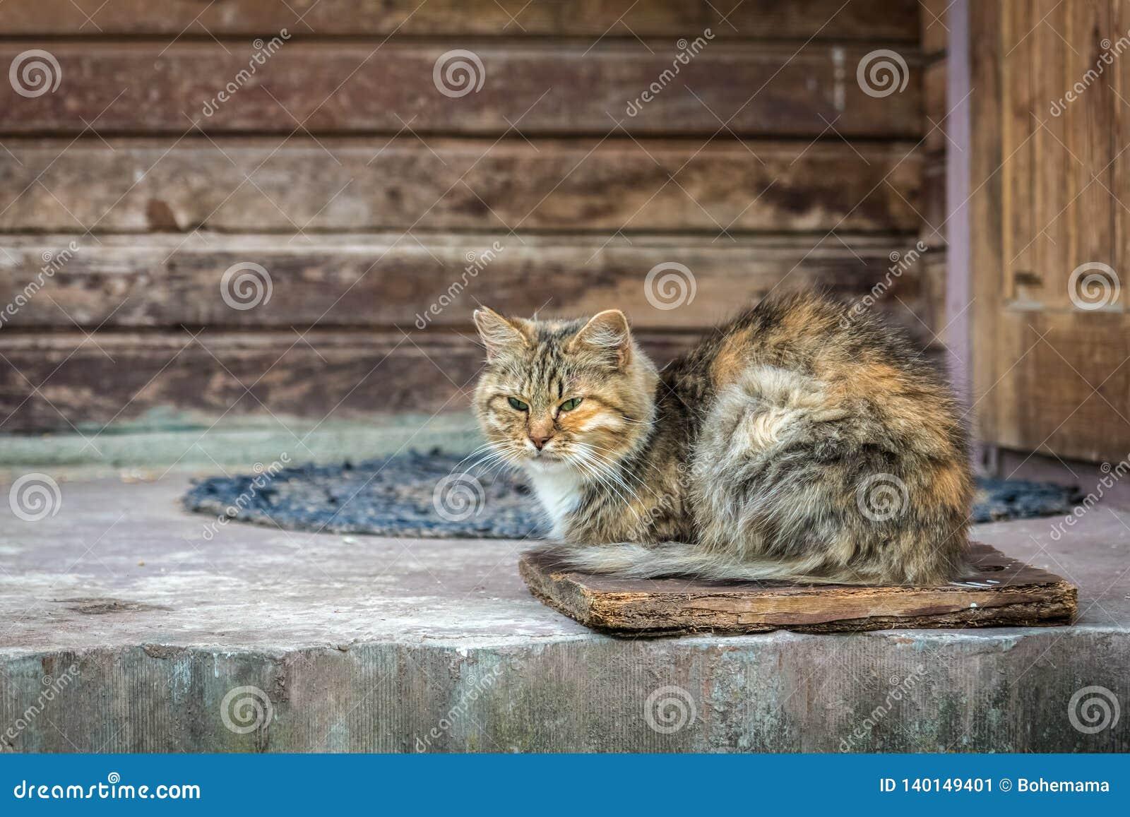 Кот имбиря striped сидя на достигшем возраста крылечке около двери старого деревянного дома