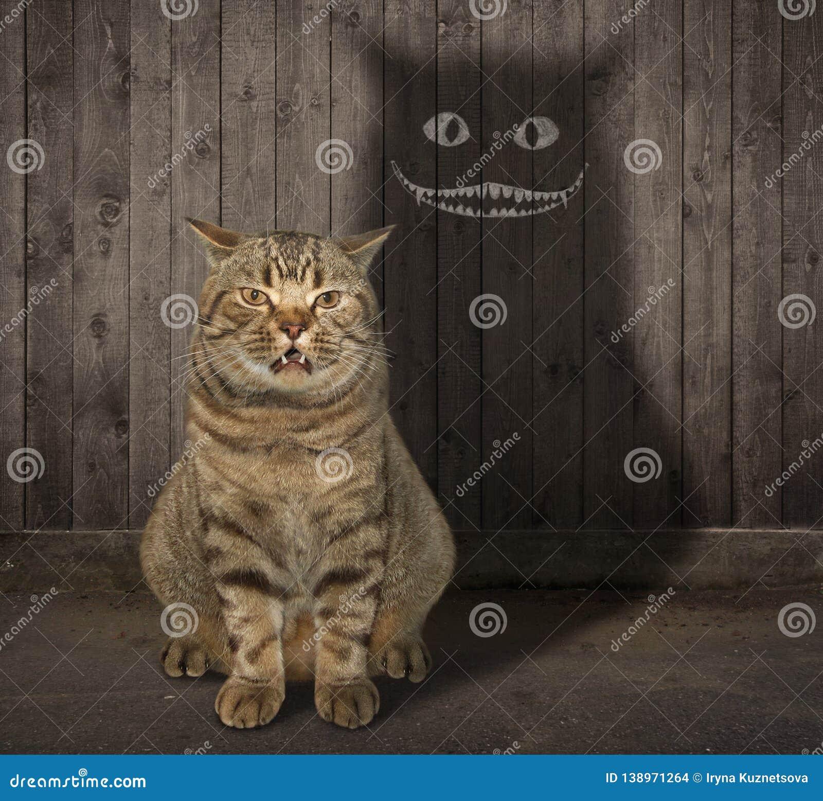 Кот и своя тень на загородке