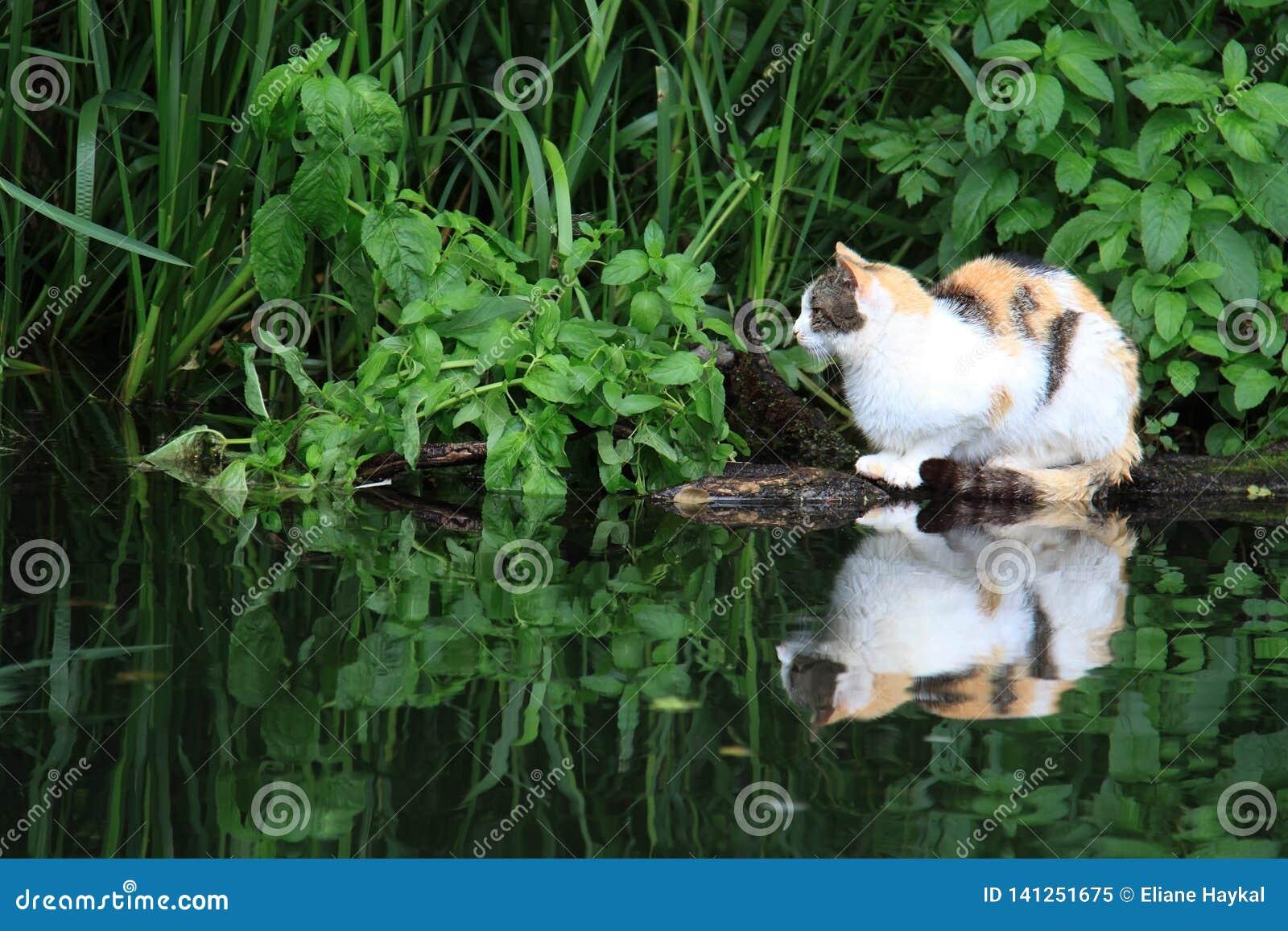 Кот отдыхая около пруда