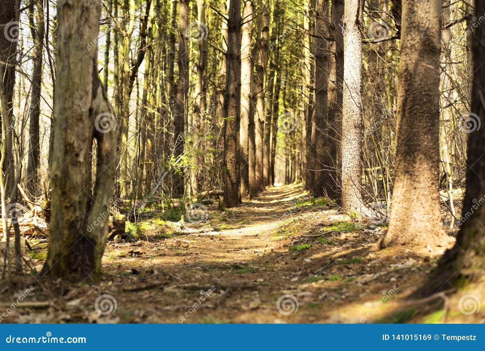 Ландшафт Коннектикута litchfield леса государства Topsmead