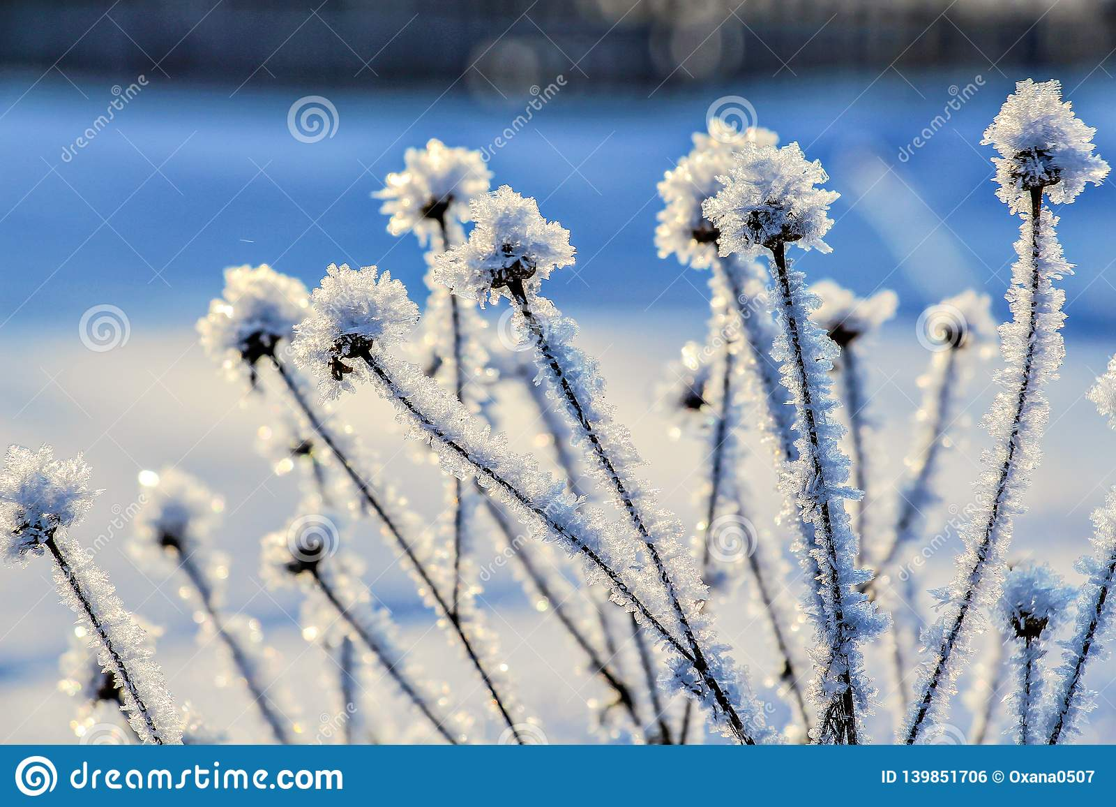 Лед покрыл wildflowers на запачканной предпосылке