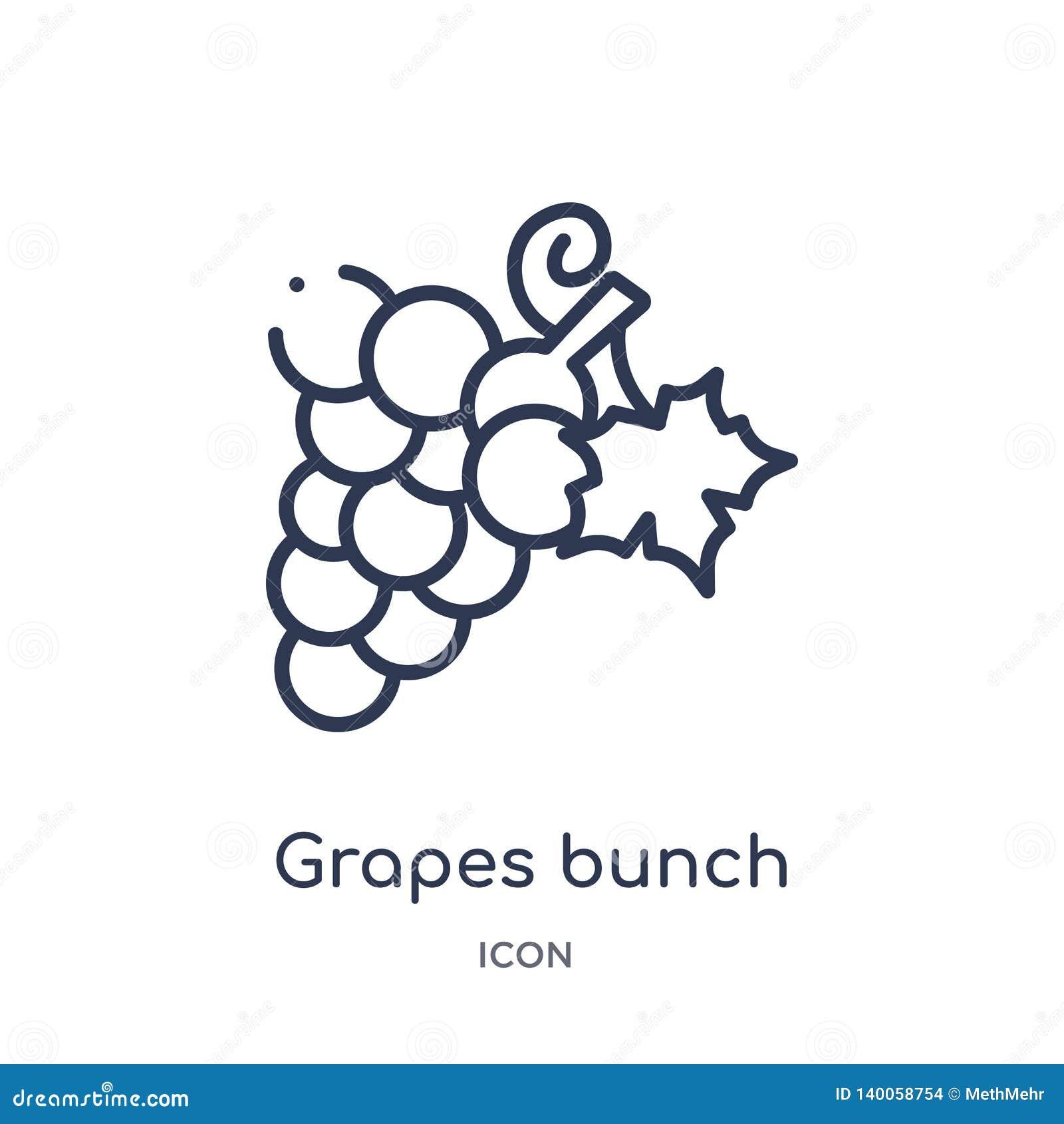 Линейный значок пука виноградин от собрания плана Греции Тонкая линия значок пука виноградин изолированный на белой предпосылке П