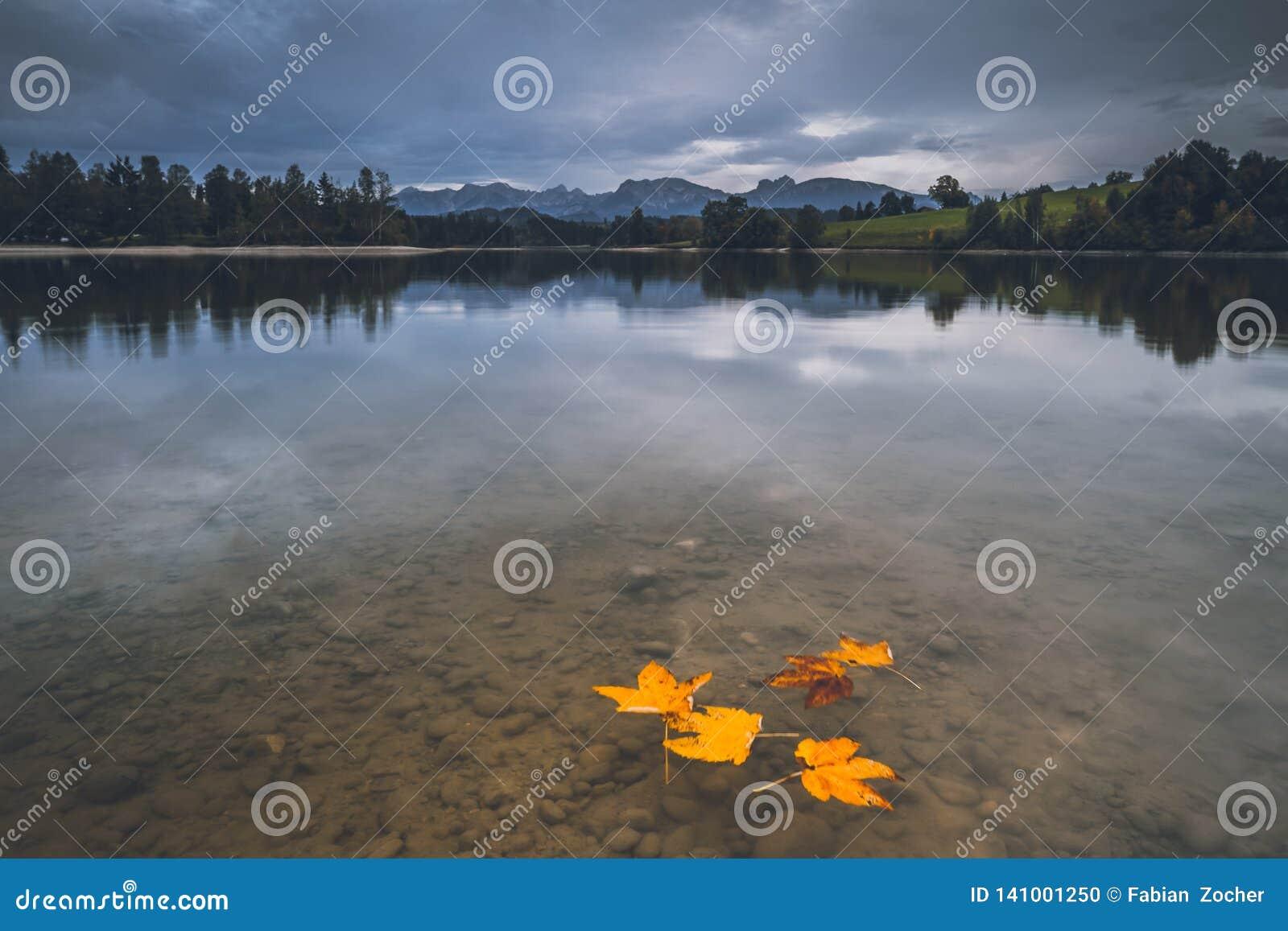 Листья в озере осени
