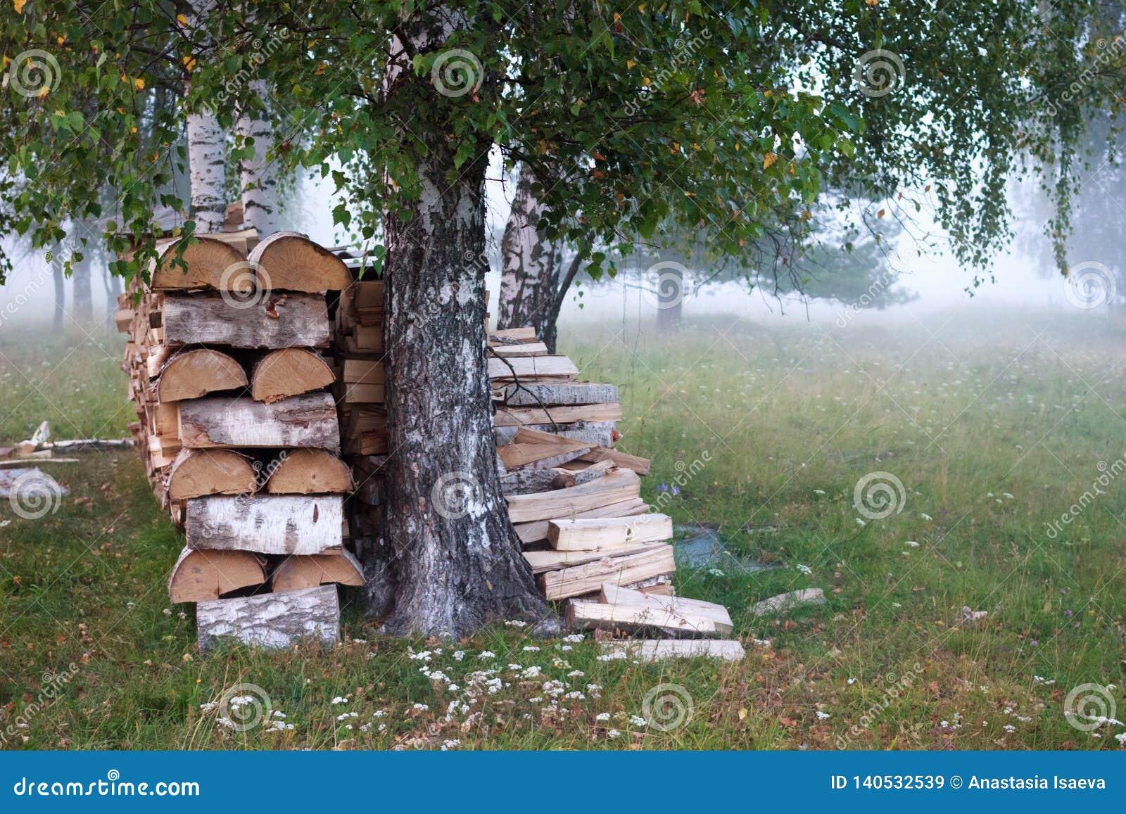 Луг/поле тумана на лете Деревья березы в тумане
