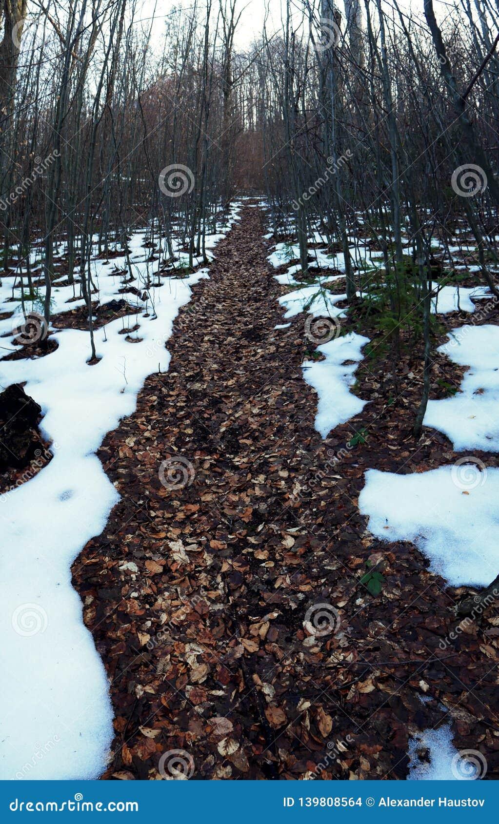 Мечтательный след в лесе Украине зимы таяния