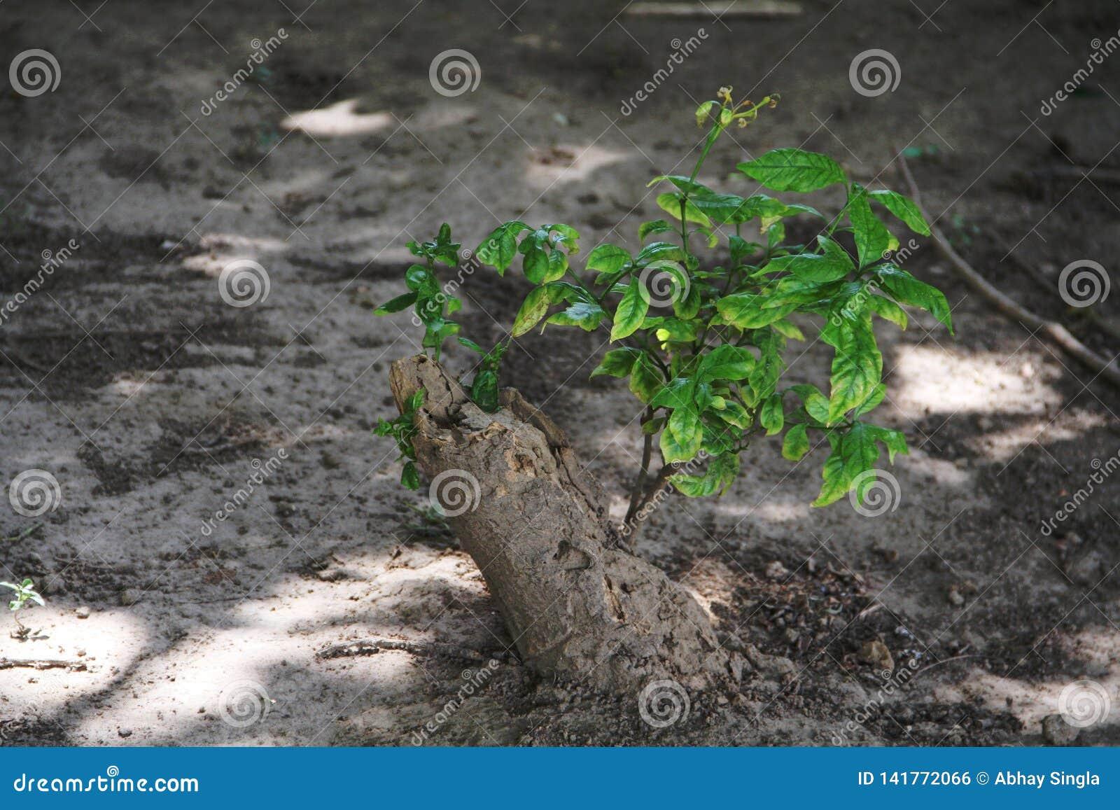 Мертвые корни дерева живы