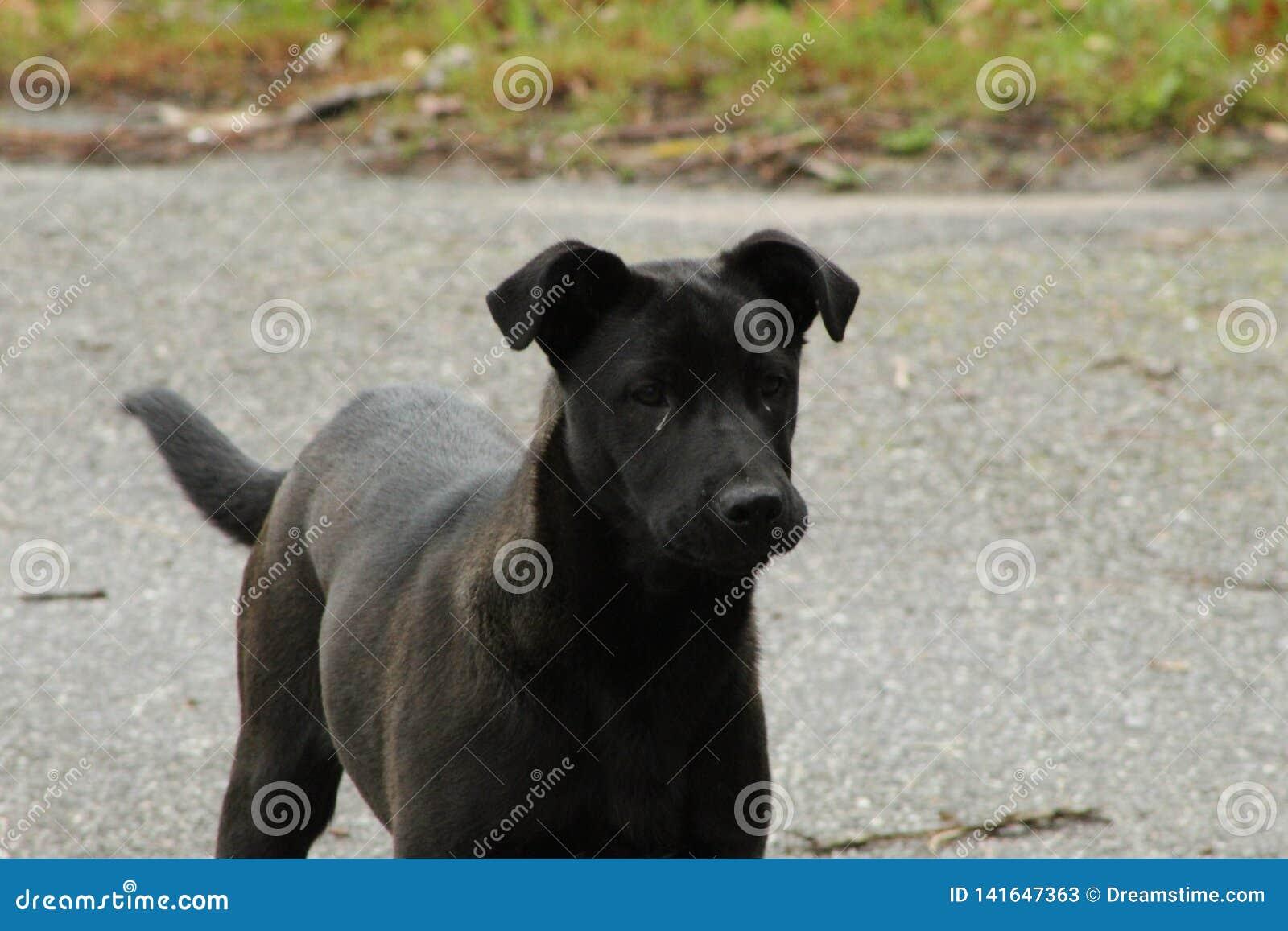 Милые черные и серые собаки