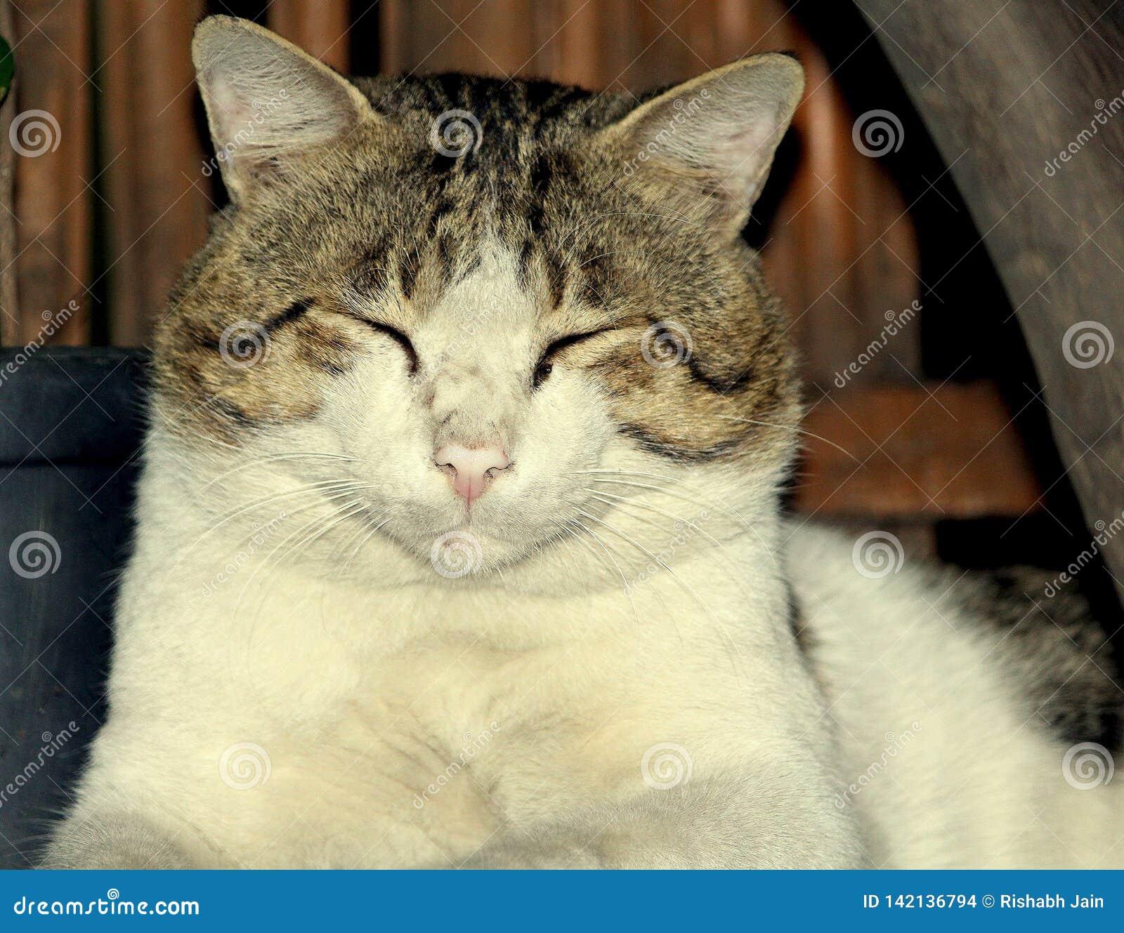 Милый коричневый и белый coloued кот