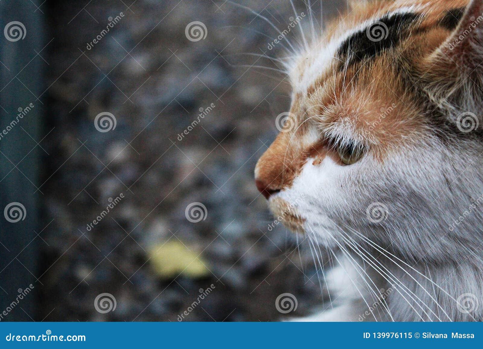 Мысль любимца стороны меха киски кота животная