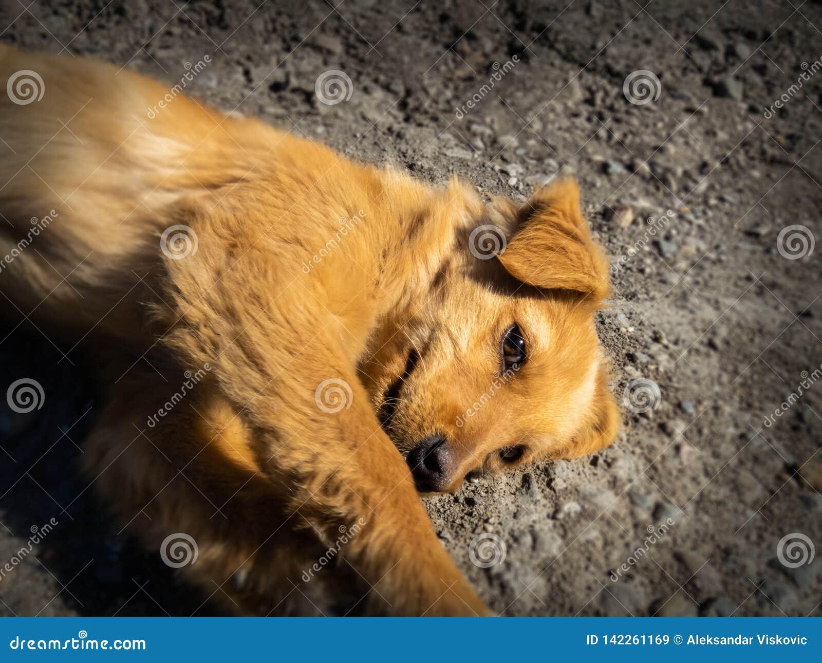 Небольшая получившаяся отказ собака на дороге