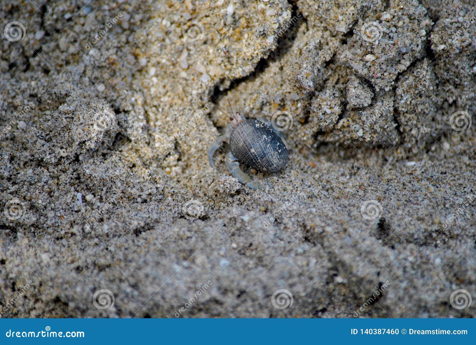 Небольшой краб затворницы на песке моря