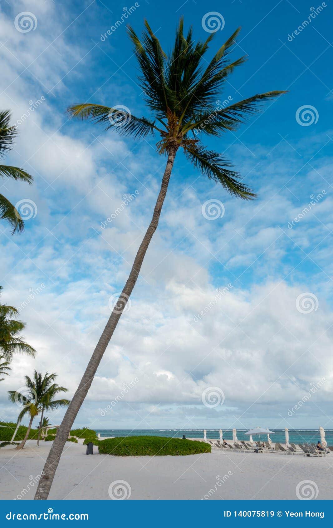 Пальмы в пляже Punta Cana