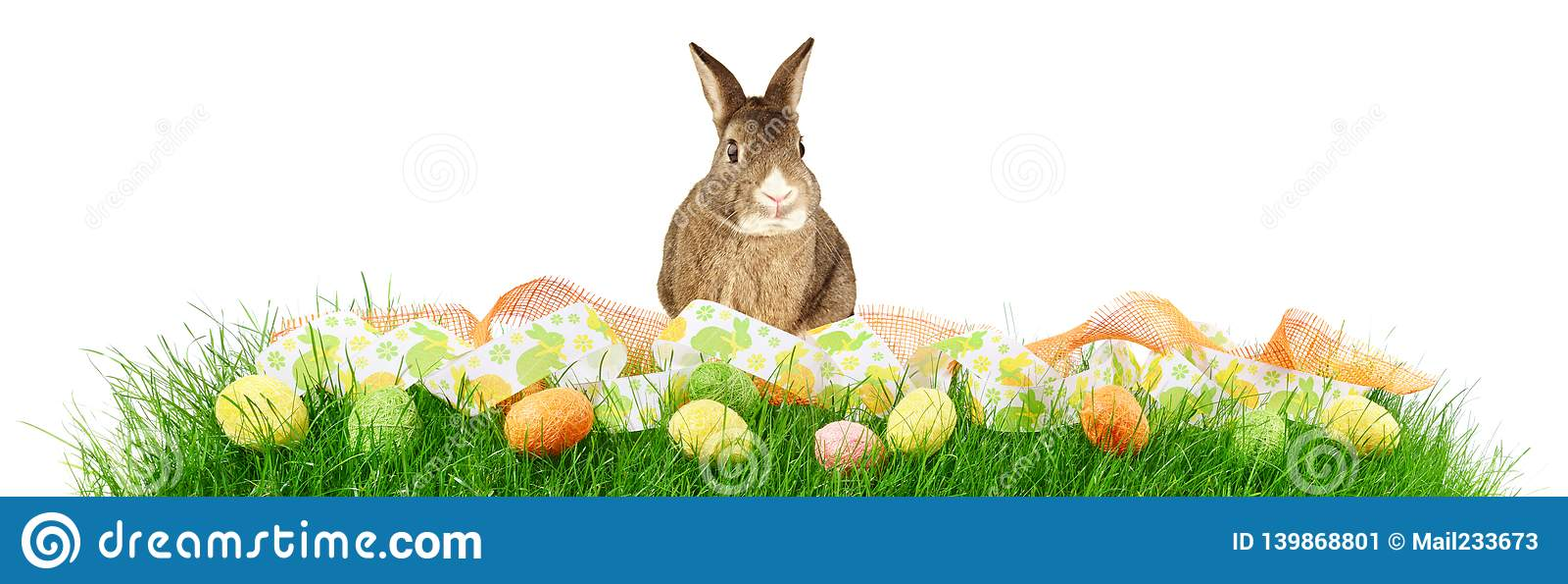 Панорама травы с пасхальными яйцами и кроликом на белой предпосылке