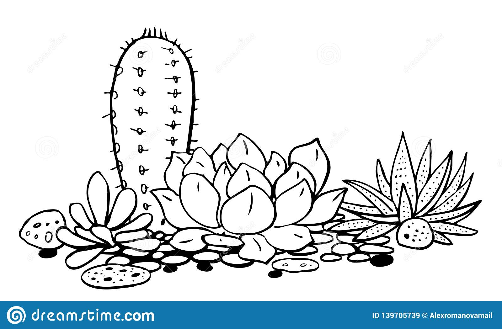 Cactus And Succulents Group Vector Hand Drawn Outline Black And White Sketch Illustration Stock Vector Illustration Of Flora Drawn 139705739