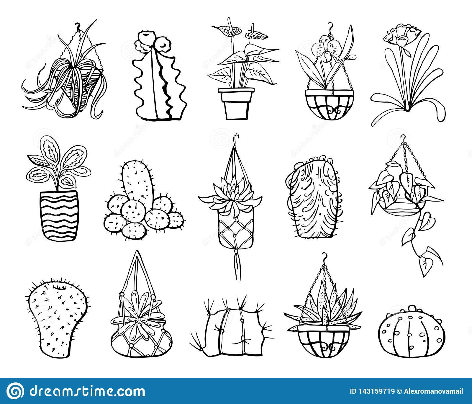 Houseplants Cactuses And Succulents In Hanging Flowerpots And Pots Vector Hand Drawn Outline Black And White Sketch Illustration Stock Vector Illustration Of Element Cacti 143159719