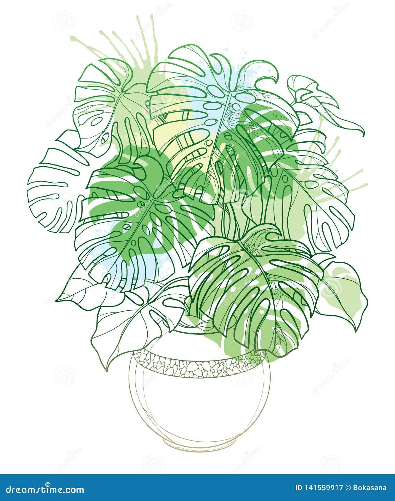 Пук лист плана вектора тропический Monstera или завода швейцарского сыра в цветочном горшке в пастельном зеленом цвете изолирован